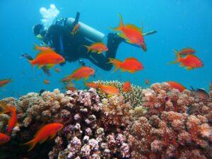 Unterwasserkamera oder Digitalkamera mit Unterwassergehäuse