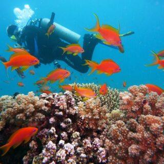Unterwasserkamera - Das sollten Sie wissen