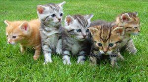 Katzenbabys spielen