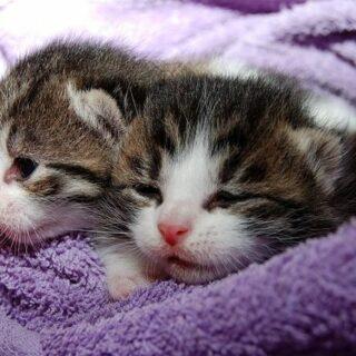 Katzenvideos - Warum Katzen im Internet herrschen