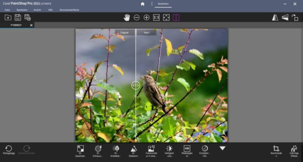 Bildbearbeitung mit Corel PaintShop Pro 2021 Ultimate